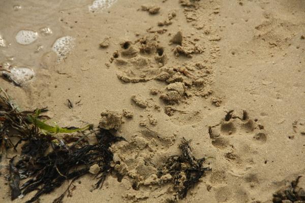 am Strand von Plouharnel