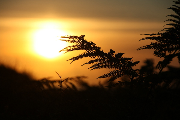 Farn, Sonnenuntergang - Bretagne