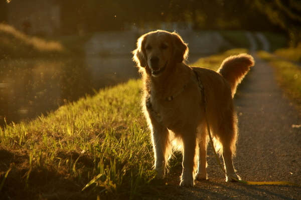 Spaziergang bei Sonnenuntergang