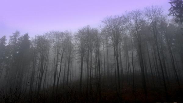 Wald hinter dem bc