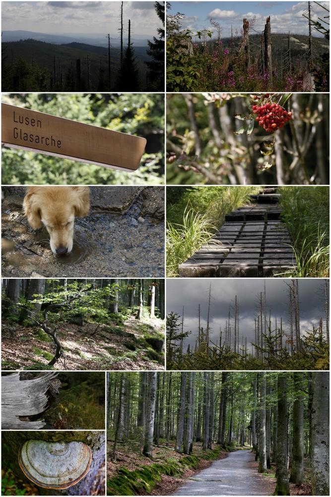 von Waldhäuser zum Lusen