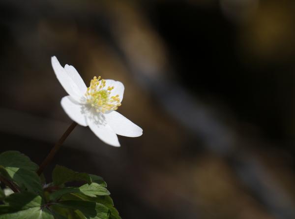 Frühling am Waldboden