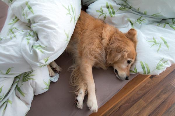 so ein Bett wär nett
