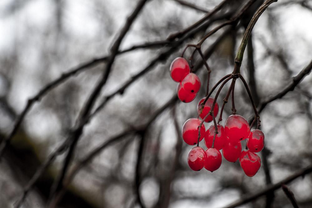 Farbtupfer an den Zweigen