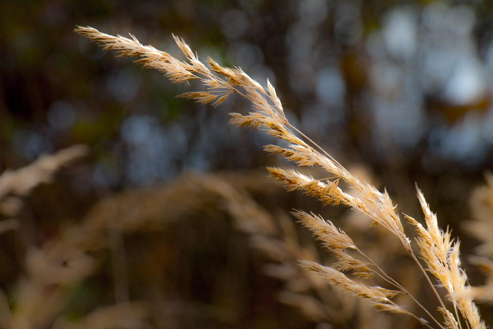 Gräser im richtigen Licht