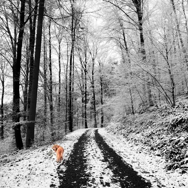 Sheeba im Schnee