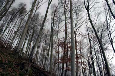 Wald Bodanrück
